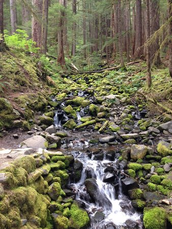 Sol Duc Falls: This is beautiful but this is not the falls KEEP GOING