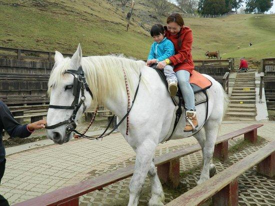 Cingjing Veterans Farm : Horse-Riding at Green Grassland