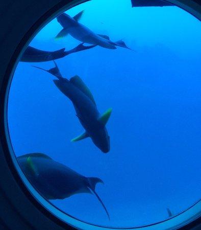 Atlantis Submarines Waikiki: Hello there..��������