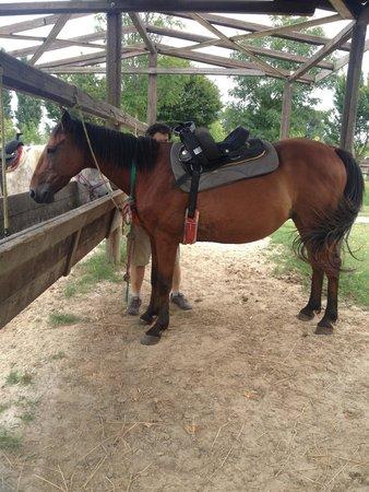 Agriturismo Prato Pozzo: horse 1