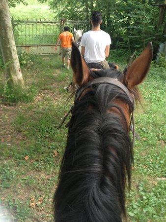 Agriturismo Prato Pozzo: horse 3