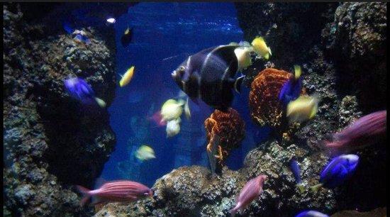 Lido di Jesolo Sea Life Aquarium: Pesci