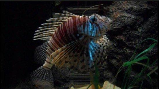 Lido di Jesolo Sea Life Aquarium: Pesce