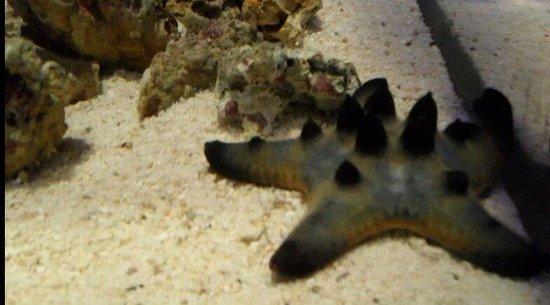 Lido di Jesolo Sea Life Aquarium: Stella