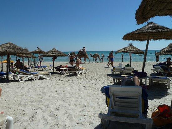 Thalassa Mahdia : La spiaggia