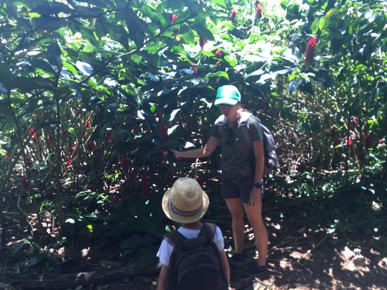 Hike Maui : Max Learning with Sonya!