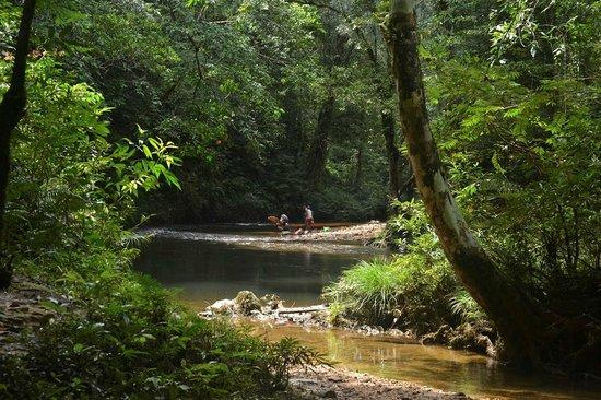Batang Ai National Park : Ai River connecting Nanga Sumpa with the water fall