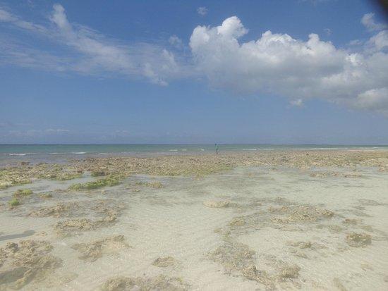 Samaki Lodge & Spa: Marée basse près du banc de sable