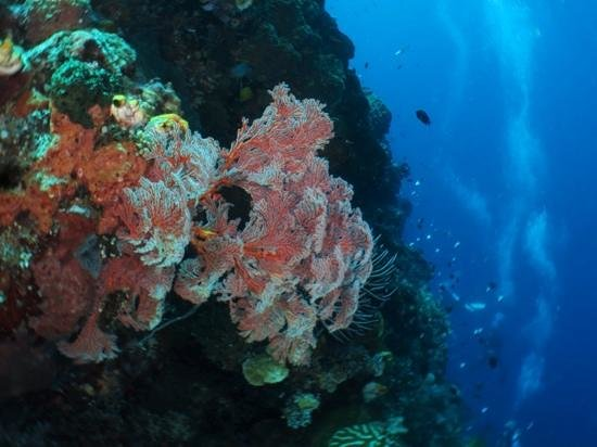 The Village Bunaken: Beautiful soft corals on the walls