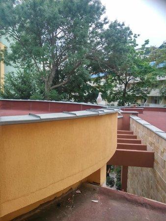 Yavor Palace: Вид с балкона на крышу