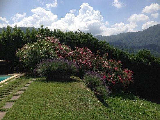 Agriturismo Podere San Rocchino: pool area