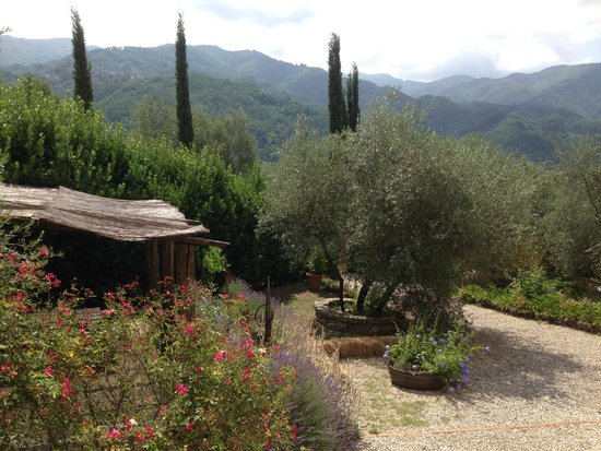 Agriturismo Podere San Rocchino: View from our room - kitchen