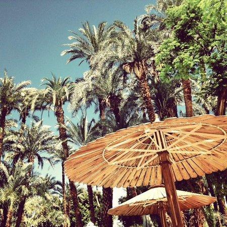 Sofitel Winter Palace Luxor: Palms at the Pool