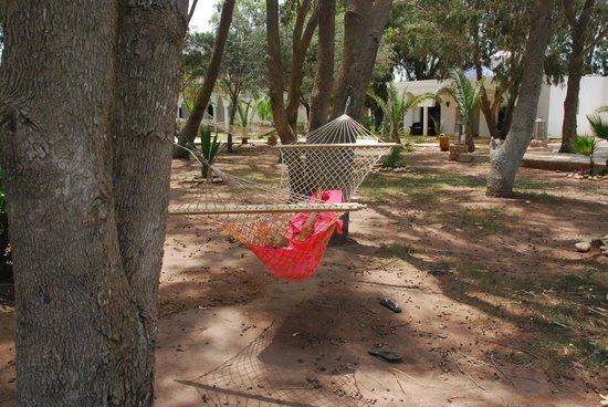 Villa Amaryllis : jardin de tilleul eucalyptus