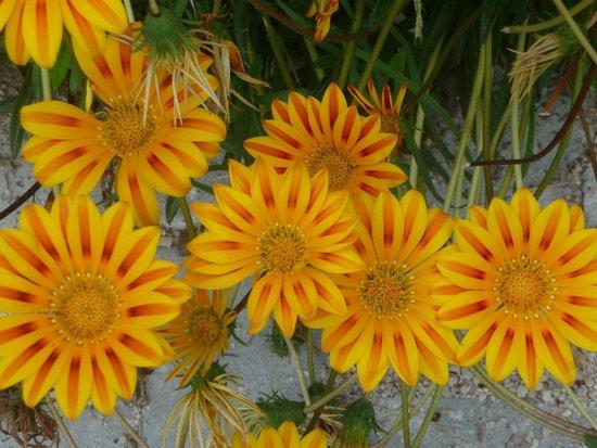 Endam Hotel: Цветы!