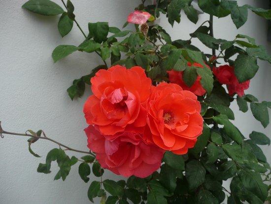Endam Hotel: Цветы