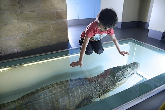 Wakefield, UK: Dare you stand on the back of the caiman!