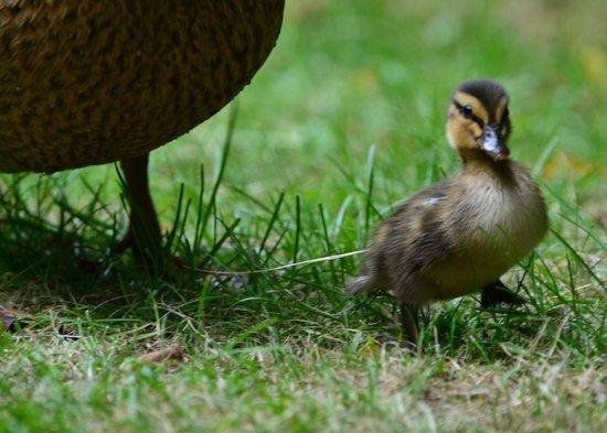 Center Parcs de Eemhof: Garden visitor