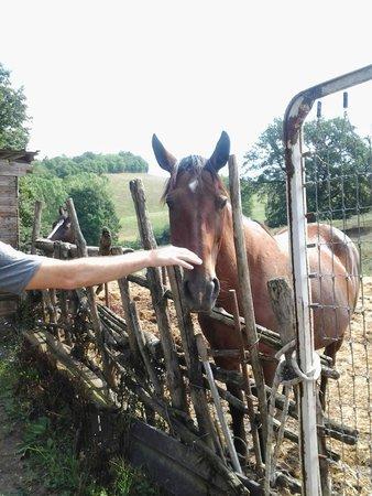 Agriturismo Quarantallina: I cavalli del Quarantallina
