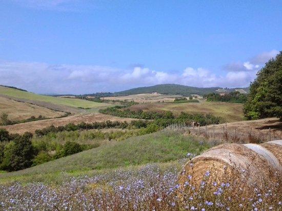 Agriturismo Quarantallina: Val d'Orcia