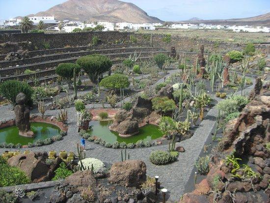Jardin de Cactus : Panoramica
