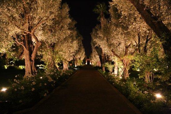La Mamounia Marrakech: Olive grove, in the grounds!