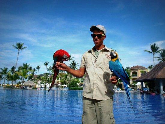 Ocean Blue & Sand: apresentação de animais