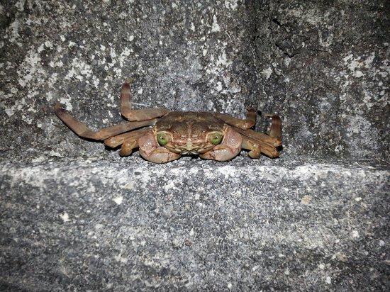 Thalassa PADI Dive Resort: Crab @ Jetty