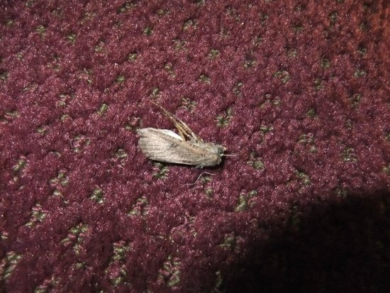 Edgewater Inn: I guess the moth wanted the room too.