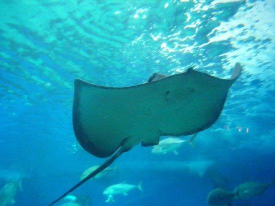 Maui Ocean Center: Beautiful sea life!