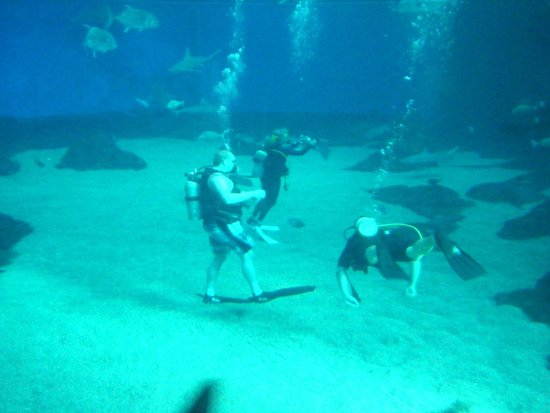 Maui Ocean Center : Massive shark tank