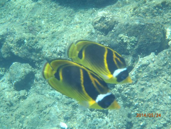 Kapoho Tide Pools: Fische