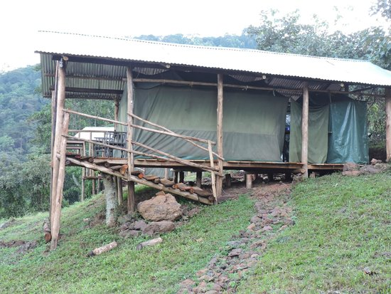 Gorilla Conservation Camp: tent lodging