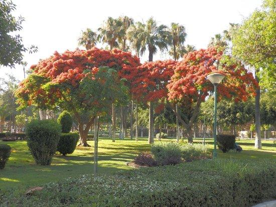 Limassol Municipal Gardens: Территория муниципального парка