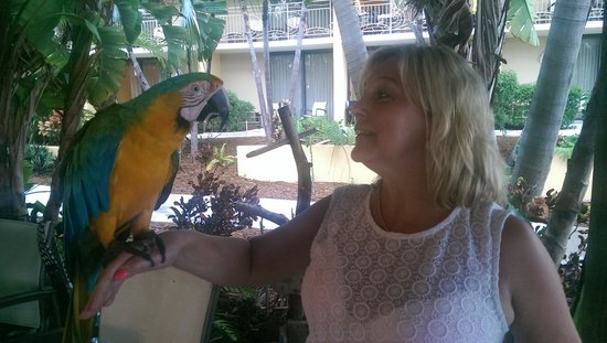 Hampton Inn Key Largo: Friendly Parrot in the Bar