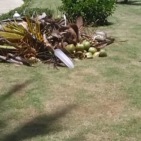 Punta Cana Princess All Suites Resort & Spa : COCONUTS