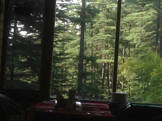 The Chalets Naldehra : the forest walk area