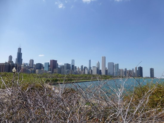 Shedd Aquarium : Chicago from the Aquarium