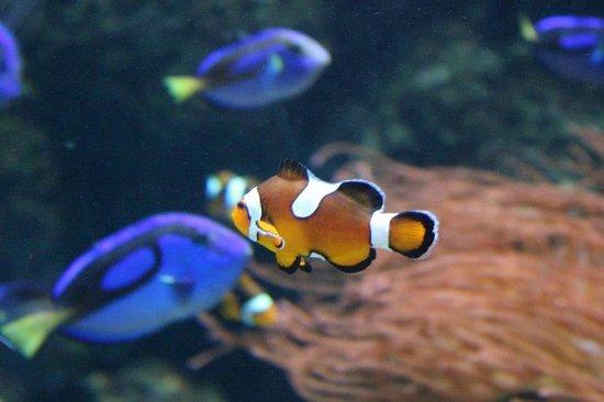 Sea Life London Aquarium: SEA LIFE AQUARIUM LONDRES
