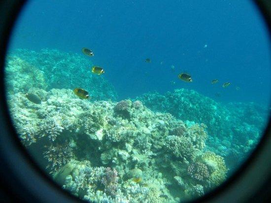 Jaz Fanara Resort & Residence: snorkling - buy underwater case from shop