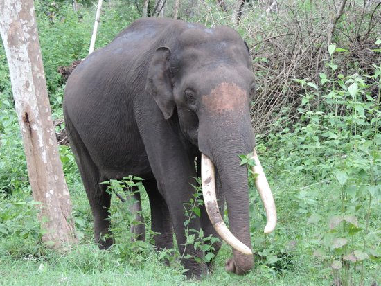 Jungle Lodges Kabini River Lodge: Safari