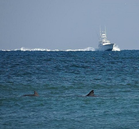 Topsail Island: boat and dolphins