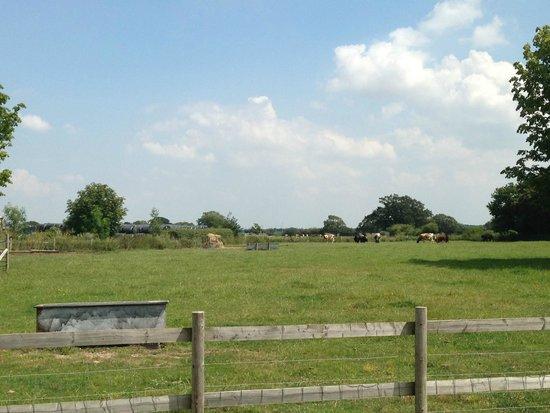 Northney Farm Tea Rooms: The Farm