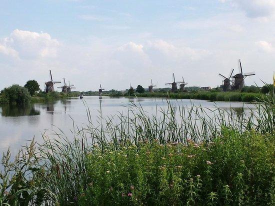 Red de molinos de Kinderdijk-Elshout: Vista de molinos desde la entrada