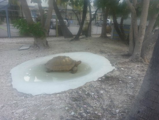 Ibis Bay Beach Resort: 1 of the tortoise/special picture for Chris the owner