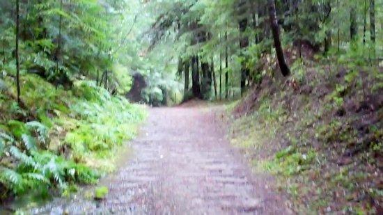 Baechtel Creek Inn: Thimbleberry Trail in Willits