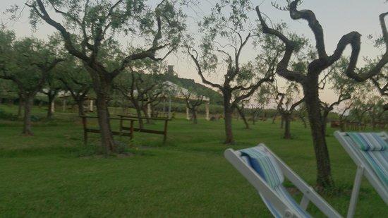 Iscairia Country House: il bel giardino con gli ulivi......