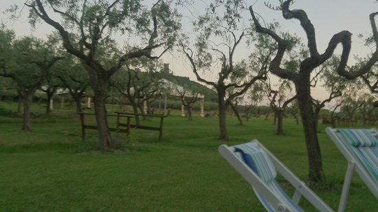 Iscairia Country House - Agriturismo: il bel giardino con gli ulivi......