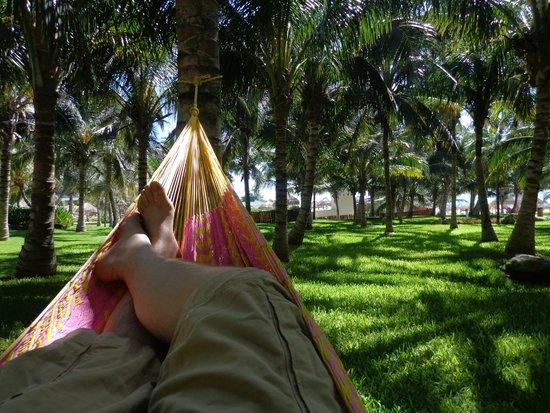 Iberostar Cancun: Las hamacas... de lo mejor