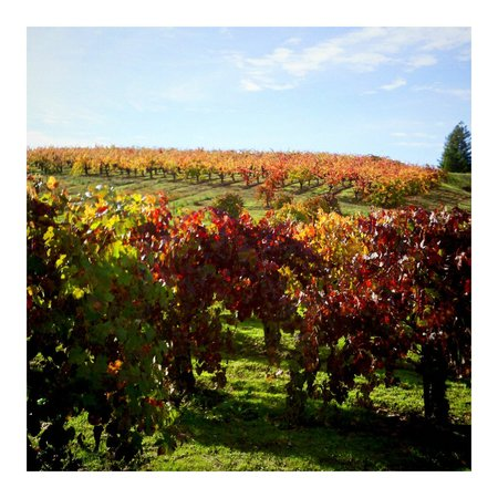 Baechtel Creek Inn: Mendocino Wine Country